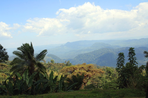 Kaffa Biosphere Reserve