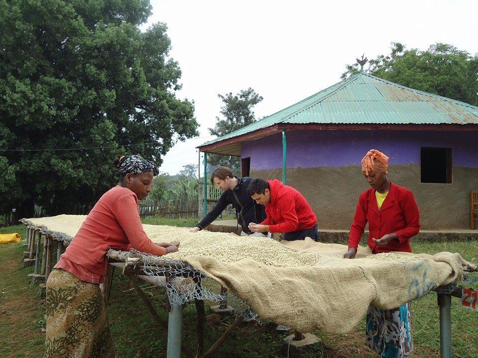 Trocknung der Kaffeebohnen in der Shilicho Kooperative