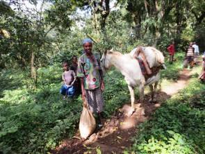 Wild Kaffeeernte in Äthiopien