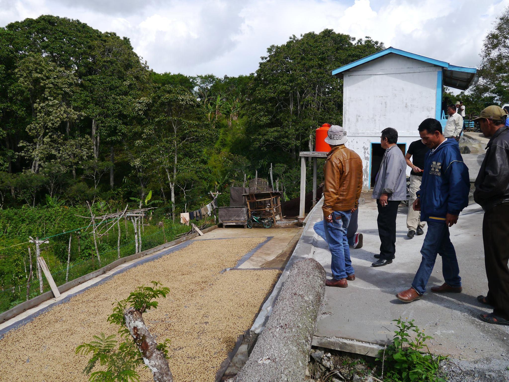 Trocknung der Kaffeebohnen in der Pemata Gayo Kooperative
